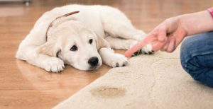 Carpet Stain Removal Scottsdale